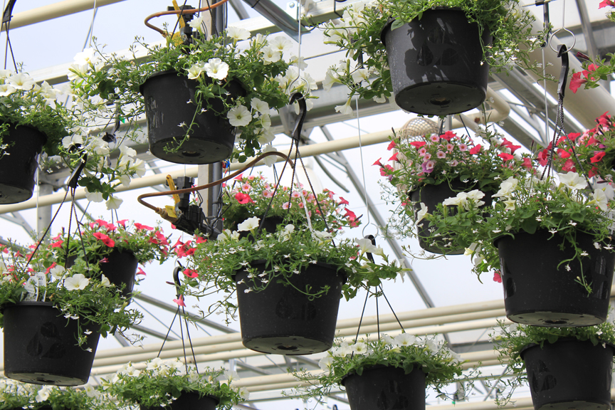 Boom Irrigation System For Greenhouses Echo From Cherry
